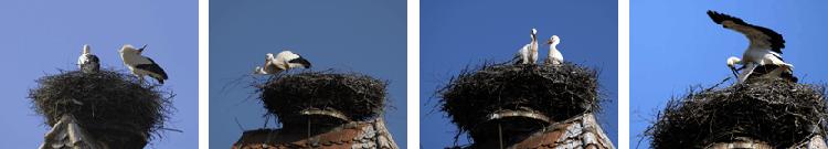 Storchenbanner